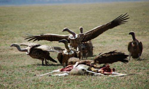 Zdjecie TANZANIA / brak / Serengeti / Życie i śmierć