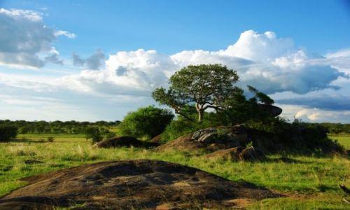 Zdjecie TANZANIA / brak / Serengeti / Serengeti