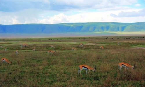 Zdjecie TANZANIA / brak / Ngorongoro / Naturalna kompozycja
