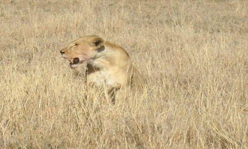 Zdjęcie TANZANIA / brak / Serengeti / Niech ktoś spróbuje się zbliżyć