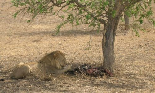 Zdjęcie TANZANIA / brak / Serengeti / Nie przeszkadzać