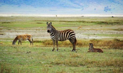 Zdjecie TANZANIA / brak / Ngorongoro / Śniadanie na trawie
