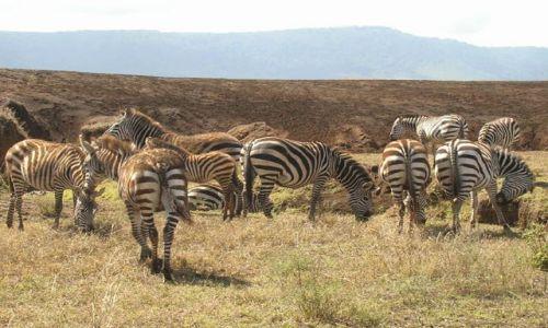 Zdjęcie TANZANIA / brak / Ngorongoro / Elegantki z Ngorongoro