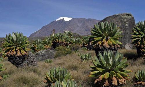 Zdjecie TANZANIA / Masyw Kilimandżaro / Droga Marango Road / Kilimandżaro 4