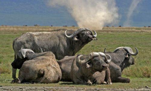 Zdjęcie TANZANIA / brak / Ngoro Ngoro / Trąba powietrzna