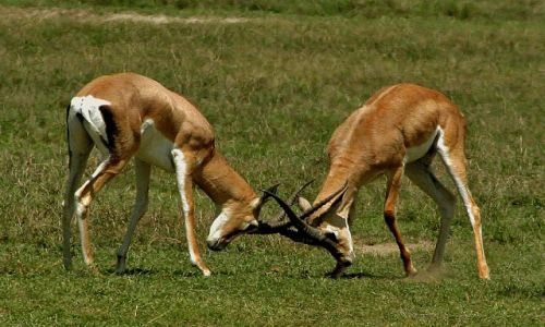 Zdjęcie TANZANIA / brak / Ngorongoro / Dyskusja
