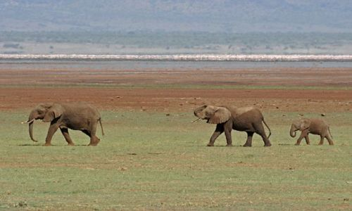Zdjecie TANZANIA / brak / Lake Manyara / Rodzinny spacer