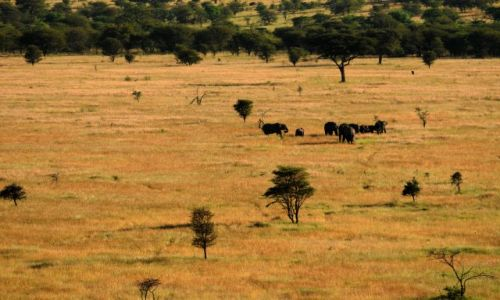 Zdjecie TANZANIA / Serengeti / Serengeti / widok na sawann