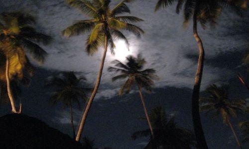 Zdjecie TANZANIA / Zanzibar / plaża / noc na plaży