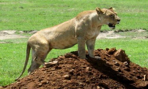 Zdjecie TANZANIA / Ngorongoro / krater Ngorongoro / FotoModel Mistrz tylko FotoGraf do bani