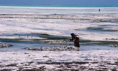 Zdjecie TANZANIA / Zanzibar / Jambiani / Poletko alg w Oceanie Indyjskim