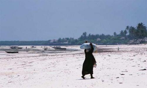 Zdjecie TANZANIA / Zanzibar / Jambiani / Zebrane algi-całodzienny plon