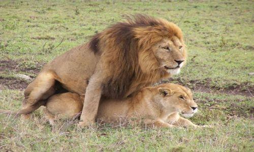 Zdjecie TANZANIA / Serengeti / Serengeti / safari