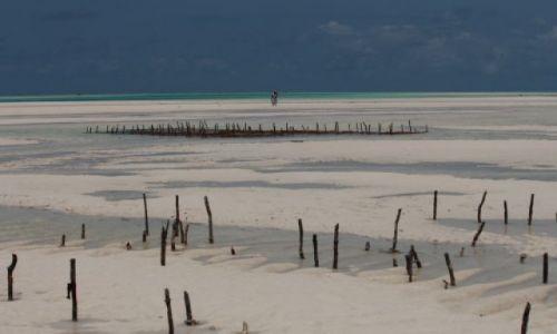 Zdjecie TANZANIA / Zanzibar / Jambiani / Odplyw