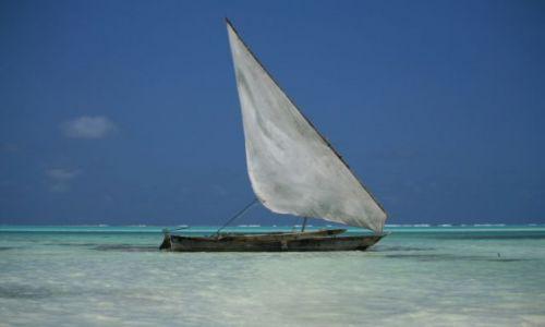 Zdjecie TANZANIA / Zanzibar / Jambiani / ... blogi spokoj ...