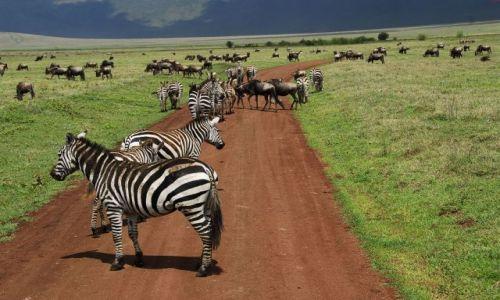 Zdjęcie TANZANIA / Ngorongoro / Krater / zebry