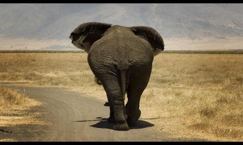 TANZANIA / brak / Ngorongoro / Mam wszystko w ....