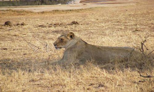 Zdjecie TANZANIA / Równina Serengeti / Park Narodowy Serengeti / Piękność na sawannie