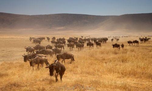 Zdjęcie TANZANIA / brak / Ngorongoro / Wędrowcy