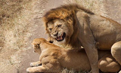 Zdjęcie TANZANIA / brak / Ngorongoro / Stosunkowo udane zdjęcie