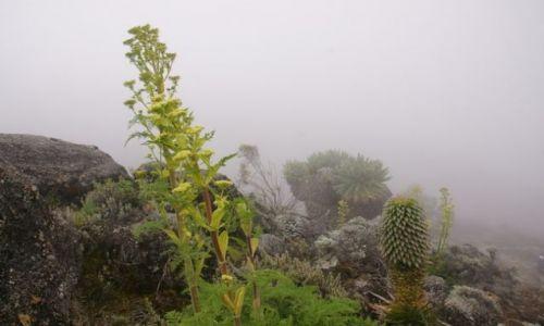 Zdjęcie TANZANIA / Moshi / Kilimandżaro / W chmurach