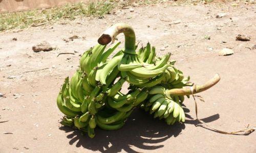 Zdjęcie TANZANIA / Manyara / Mto Wa Mbu / Oferta handlowa