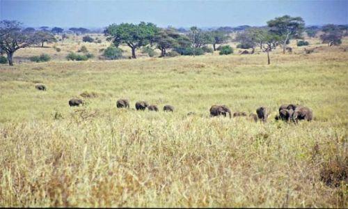 Zdjęcie TANZANIA / brak / Tarangira / stado słoni