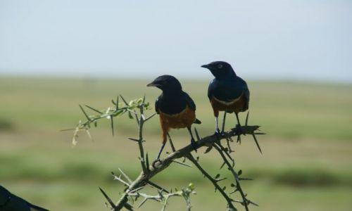 Zdjecie TANZANIA / - / Park Serengeti / UWAGA!Ile mamy nóżek?