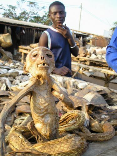 Zdjęcia: stolica: LOME , Afryka , targ voodoo, TOGO