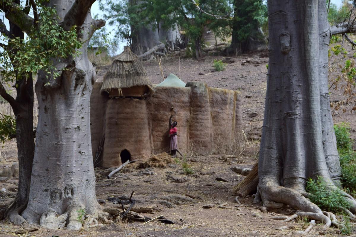 Zdjęcia: Nadoba, Koutammakou, Między baobaby, TOGO