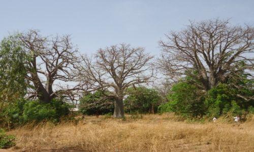 Zdjęcie TOGO / Region Kara / okolice Nadoby / Baobaby