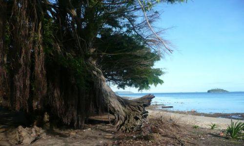 Zdjęcie TONGA / Vava'u / Pacific / Tapana