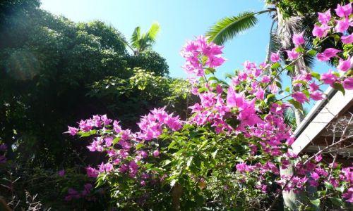 Zdjęcie TONGA / Tongatapu / Nuku'alofa / Kwiaty Tonga