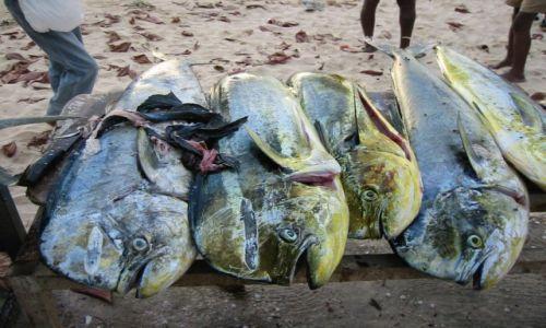 Zdjęcie TRYNIDAD I TOBAGO / Tobago / Tobago / świeży połów