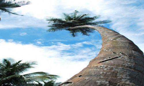 Zdjęcie TRYNIDAD I TOBAGO / Chaguramas / Chaguramas / Kokosy