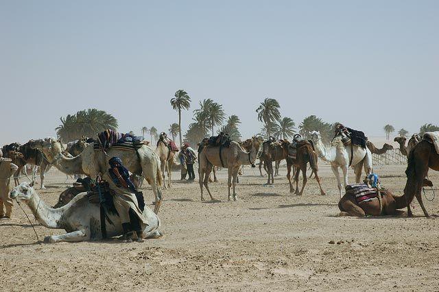 Zdj�cia: Sahara, Sahara, przed wypraw�, TUNEZJA