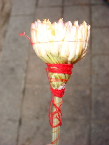 Zdj�cia: Tunis, kwiat ja�minu, TUNEZJA