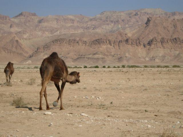 Zdjęcia: Al DŻARID, JAMAL:), TUNEZJA