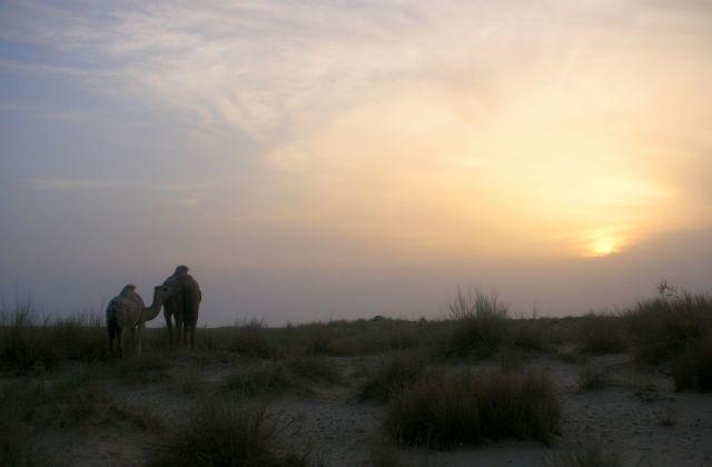 Zdjęcia: PUSTYNIA SAHARA, wieczorny spacer , TUNEZJA