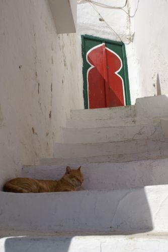 Zdjęcia: SIDI BOU SAID, SJESTA, TUNEZJA