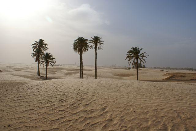 Zdjęcia: douz, sahara, piaski pustyni, TUNEZJA