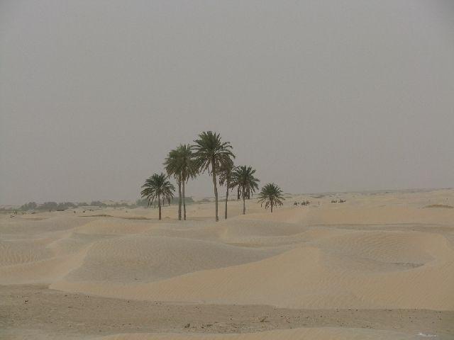 Zdjęcia: okolice Douz, pustynia, TUNEZJA