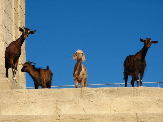 Zdjęcia: Monastir, Statyści, TUNEZJA