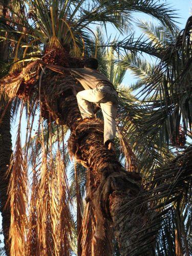 Zdjęcia: W oazie, Tunezja, TUNEZJA