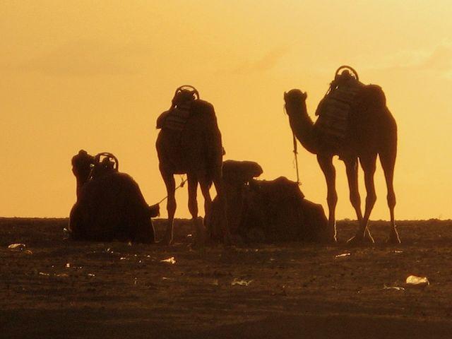 Zdjęcia: Tunezja, W oczekiwaniu na zachód słońca, TUNEZJA