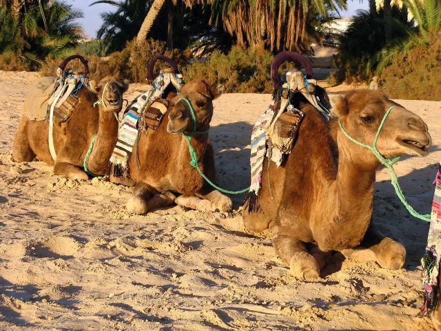 Zdj�cia: Tunezja, W oczekiwaniu na turyst�, TUNEZJA