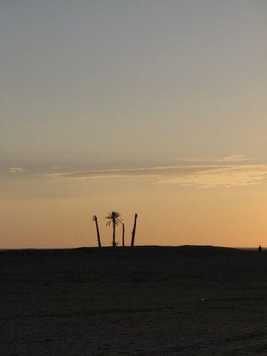 Zdjęcia: Tunezja, Palmy, TUNEZJA