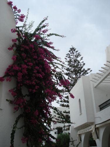 Zdjęcia: uliczka, port el kantoui, przyroda, TUNEZJA