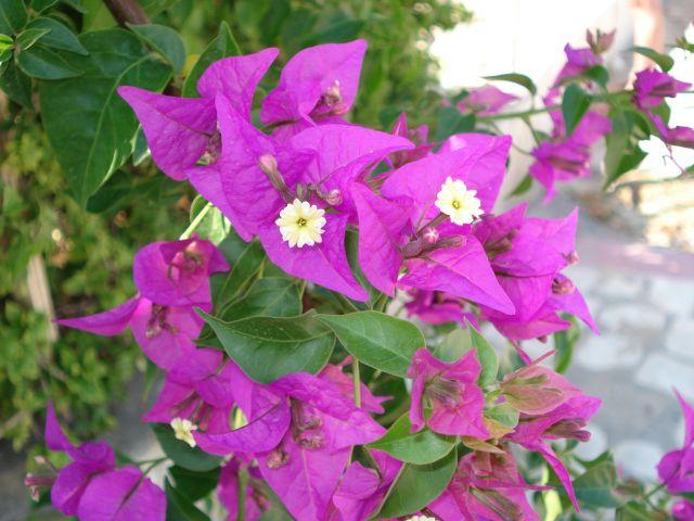 Zdjęcia: port el kantoui, kwiaty, TUNEZJA