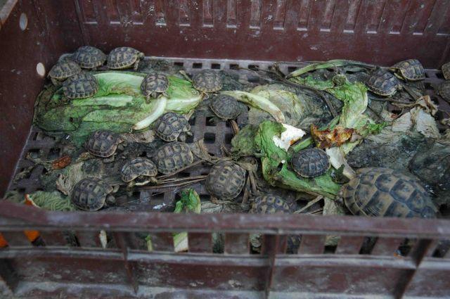 Zdjęcia: sousse, pamiątki na sprzedaż, TUNEZJA